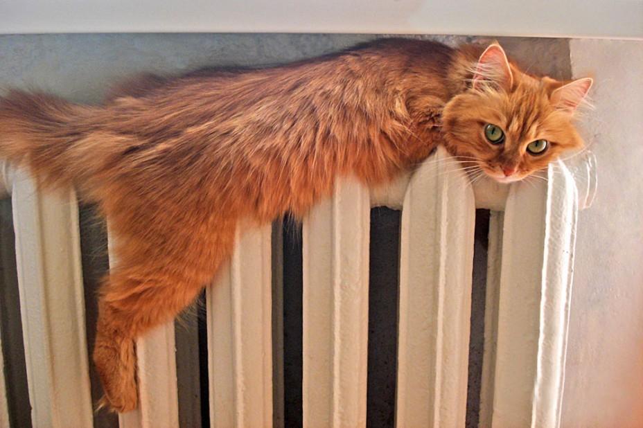 В домах Камышина станет тепло через несколько дней