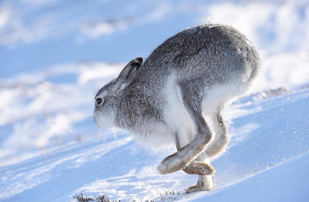 За мечту о рагу из зайца, загнанного на автомобиле, охотнику грозит до полугода ареста