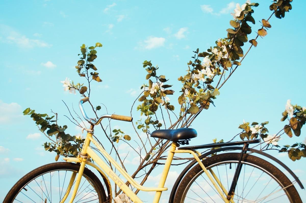 В Камышине полиция нашла украденные велосипеды, с которыми их хозяйка давно попрощалась