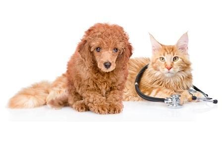 Petstory.ru: полный спектр ветеринарных услуг для вашего любимца