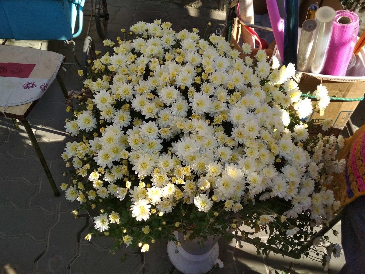 В Камышине открываются хризантемовые базары