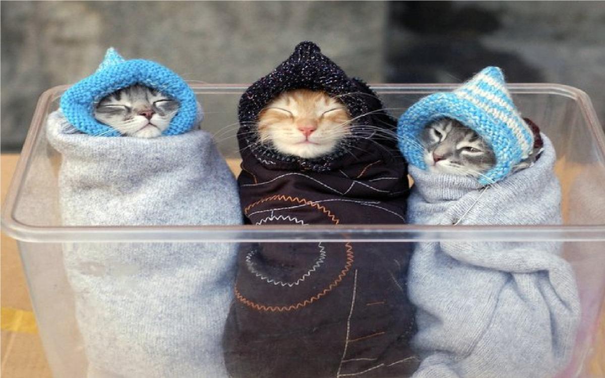 В Камышине утро рабочей недели началось с мороза до – 10 градусов