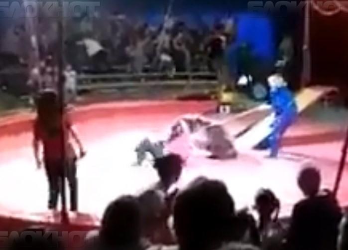 В соседнем с Камышинским Ольховском районе цирковой медведь кинулся на дрессировщика (видео)