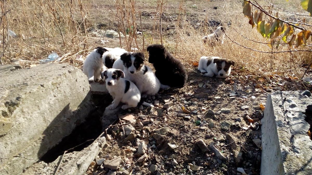 9 милых щенков, брошенных на произвол судьбы, ищут хозяев в Камышине